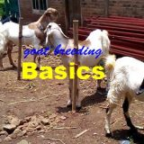 dasar beternak kambing
