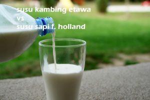 susu-kambing-etawa-vs-susu-sapi