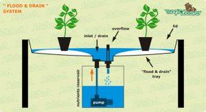 sistem-bertanam-hidroponik-flood&drain
