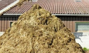 making cow manure compost from cow dung and rice straw