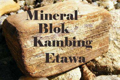 mineral blok untuk kambing