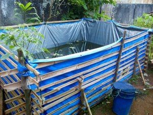 budidaya lele ternak lele kolam terpal