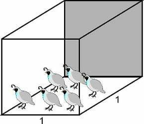 cage density for raising quail