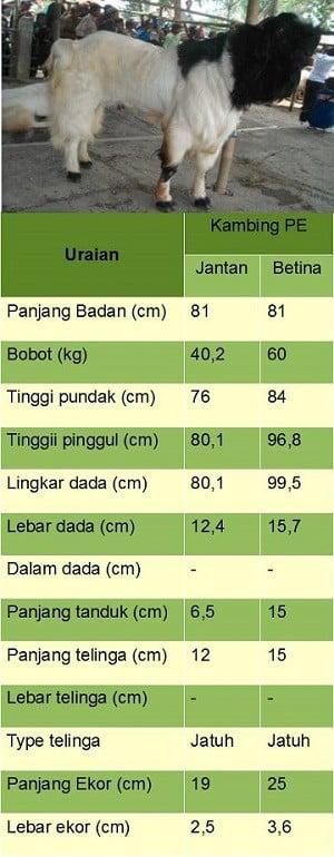 ciri - ciri jenis kambing 2 PE