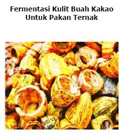 fermentasi pakan kambing kulit buah kakao