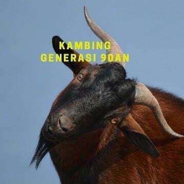 gambar kambing lucu - kambing 2 d
