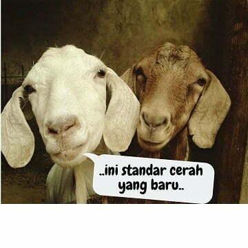 gambar kambing lucu - kambing 2 e