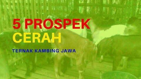 prospek ternak kambing jawa