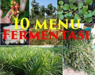 10 menu pakan kambing fermentasi tumb