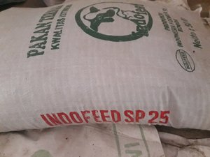 bahan baku konsentrat sapi yang bisa digunakan selain konsentrat sapi indofeed sp25