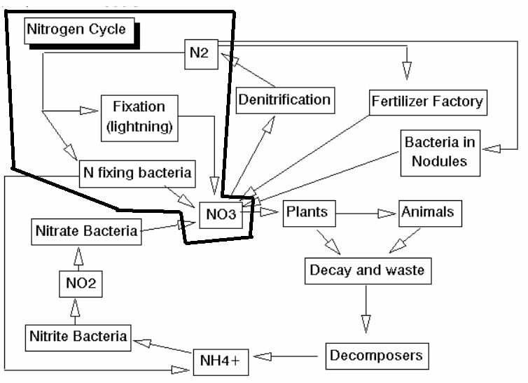 cara membuat probiotik nitrobacter - siklus fiksasi nitrogen