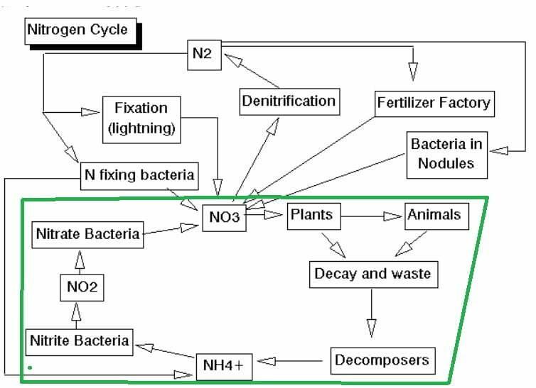 cara membuat probiotik nitrobacter - siklus nitrogen peternakan