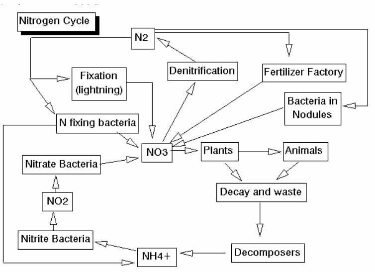 cara membuat probiotik nitrobacter - siklus nitrogen