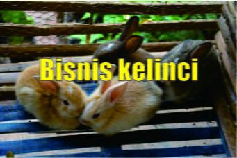 peluang usaha ternak kelinci