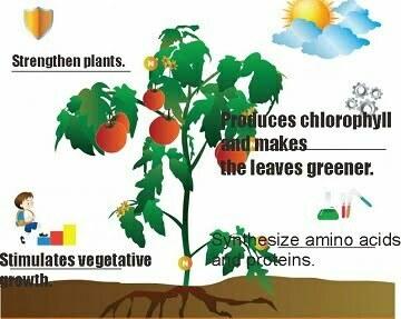 Nitrogen functon for plants - best nitrogen source for plants