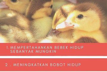 em4 peternakan untuk bebek pedaging