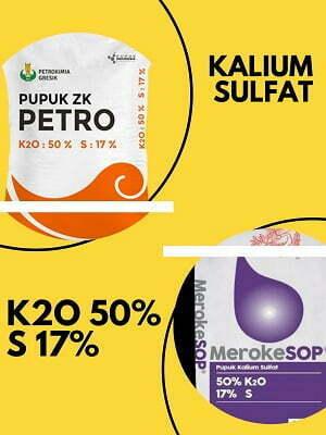 kalium sulfat - pupuk yang mengandung kalium tinggi