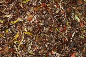 cara membuat pupuk kompos dari dedaunan