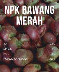 dosis pupuk npk untuk bawang merah
