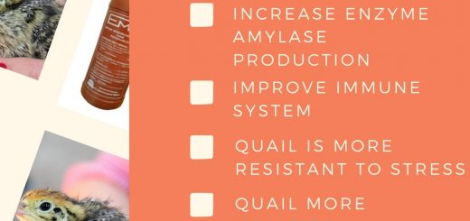em4 for quails