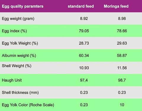 moringa for quails