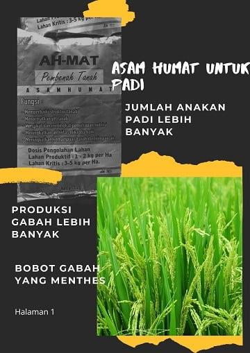 asam humat untuk padi